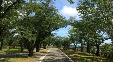 涌谷資料館への道